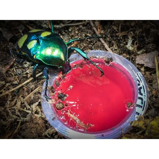 Beetle Jelly Dragon...