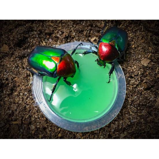 Beetle Jelly Dragon Melon...